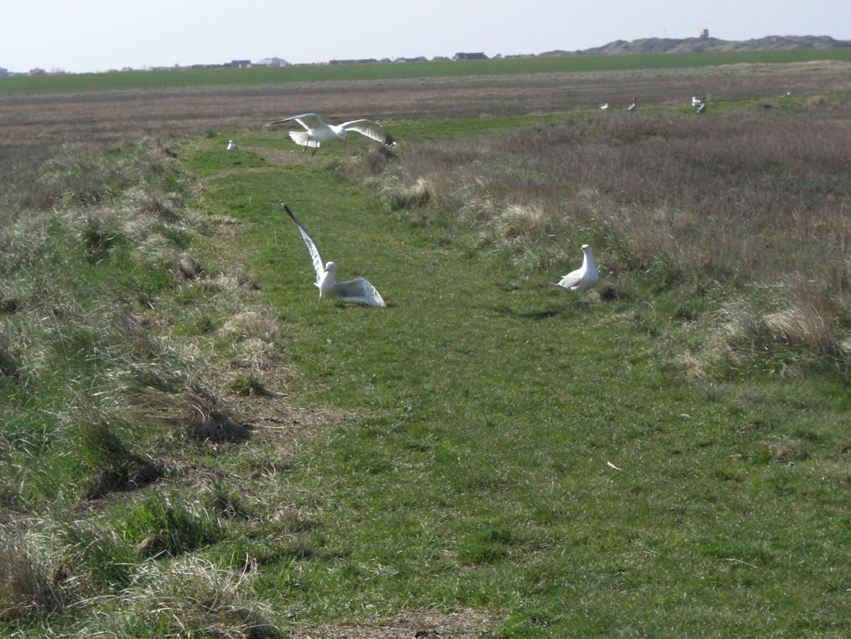 Langeoog Vögel